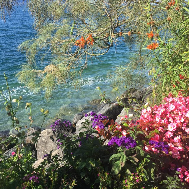 flowers in montreux