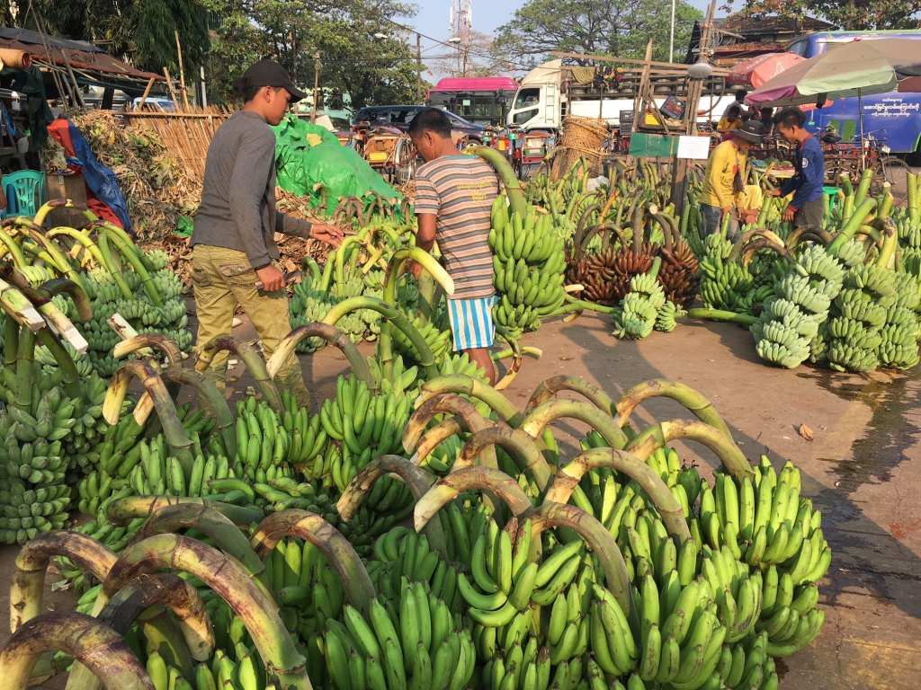 banana wholesale market